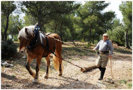 debardage à cheval pour la protection de l`environnement